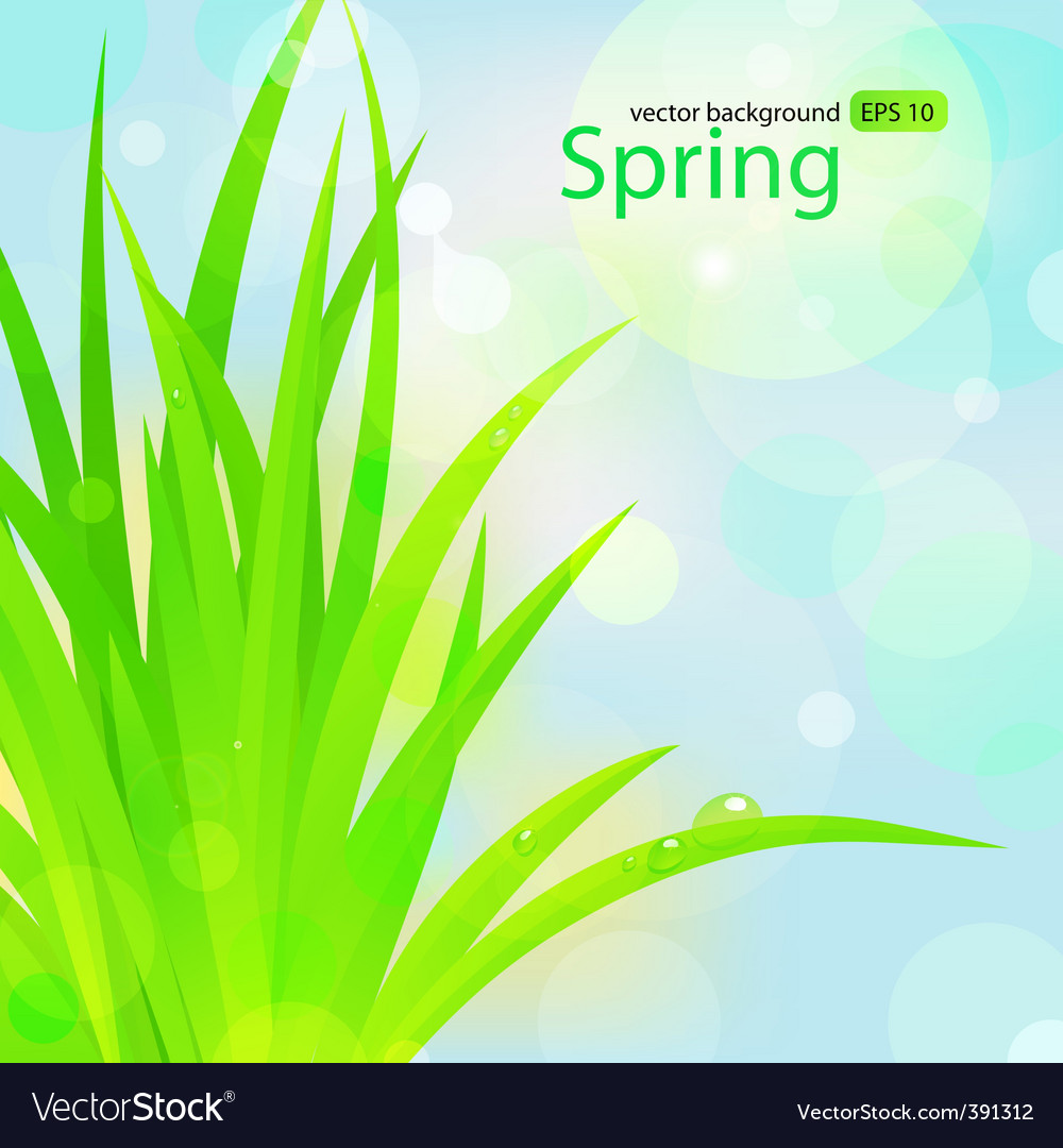 Spring grass with water drops vector | Price: 1 Credit (USD $1)
