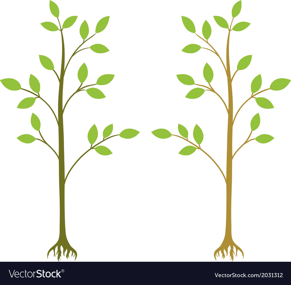 Two young trees vector | Price: 1 Credit (USD $1)