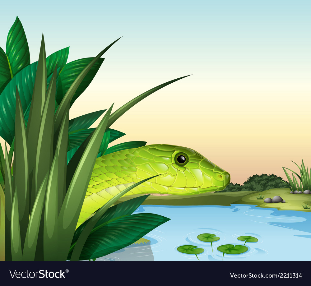 A snake at the pond vector | Price: 1 Credit (USD $1)