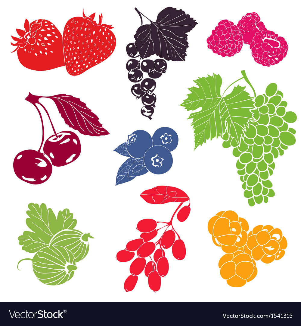 Berries collection vector   Price: 1 Credit (USD $1)