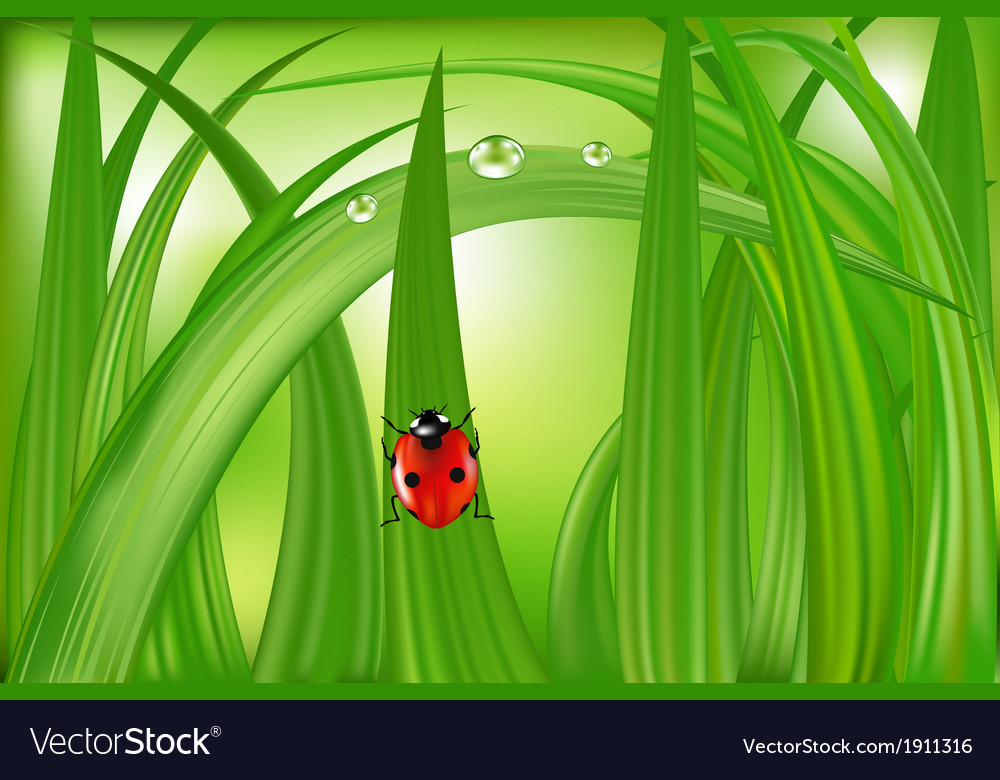 Ladybug on green grass vector | Price: 1 Credit (USD $1)