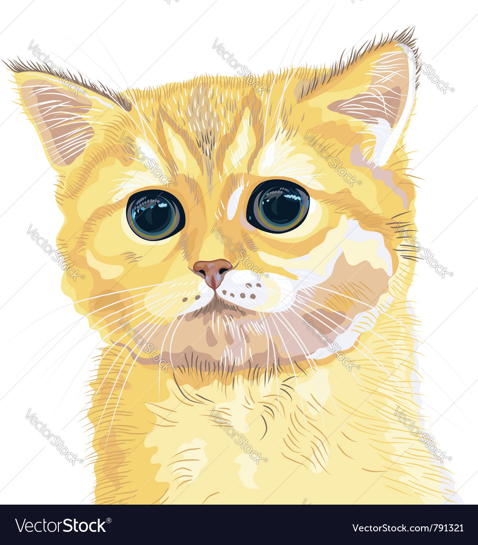 Cute fluffy british kitten vector | Price: 3 Credit (USD $3)