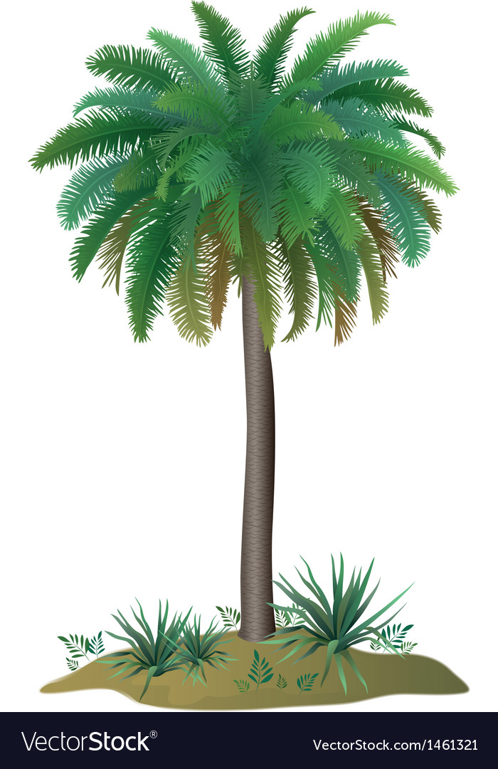 Palm tree and plants vector | Price: 1 Credit (USD $1)