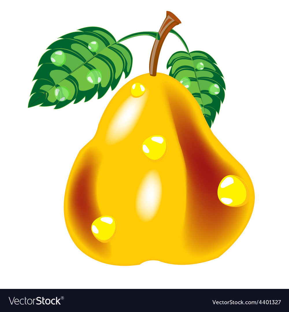 Ripe pear vector | Price: 1 Credit (USD $1)
