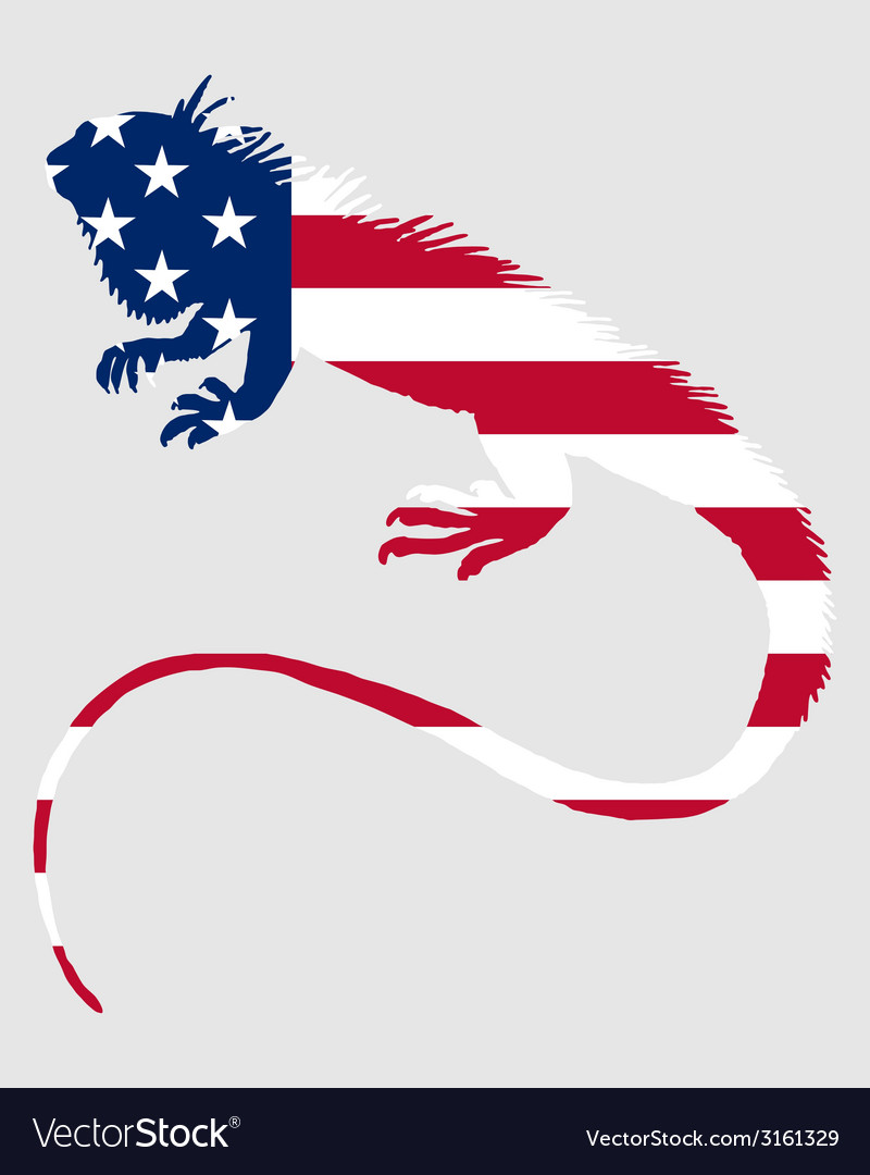 Iguana united states of america vector | Price: 1 Credit (USD $1)