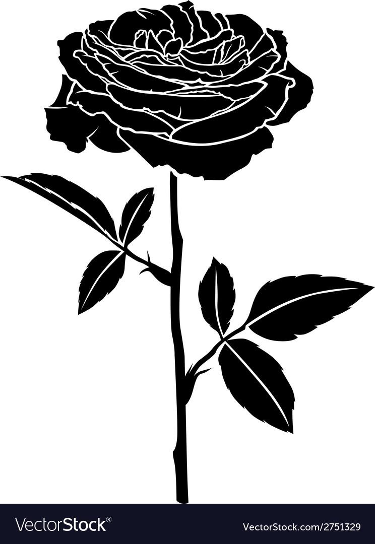 Rose rose vector | Price: 1 Credit (USD $1)