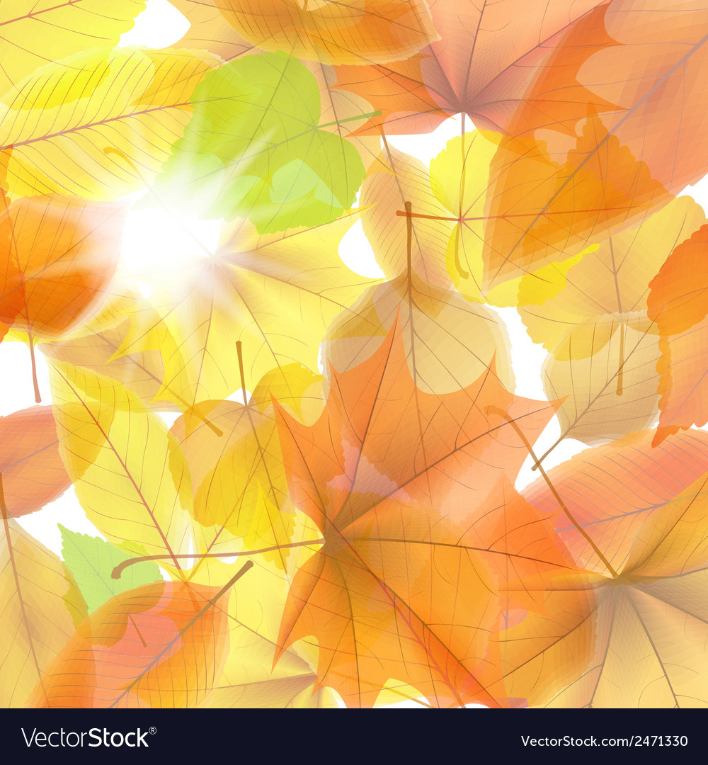 Autumn background with maple leaves plus eps10 vector | Price: 1 Credit (USD $1)