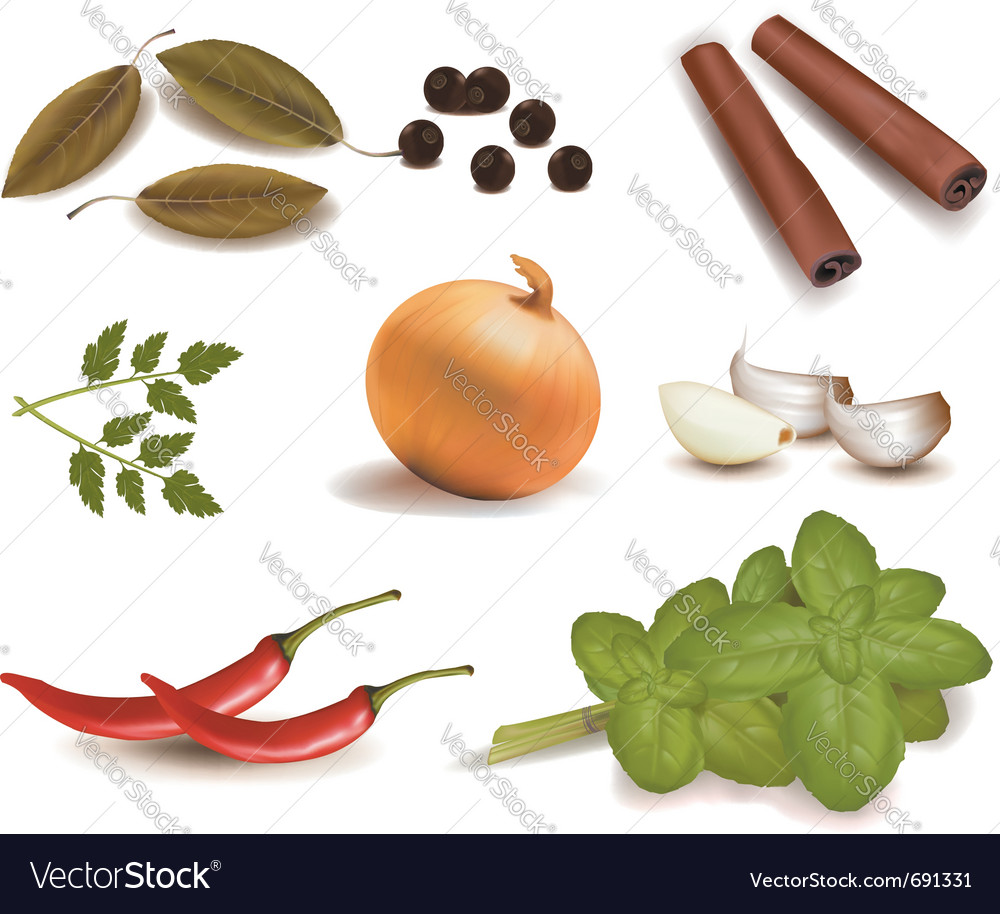 Group of spices vector | Price: 3 Credit (USD $3)