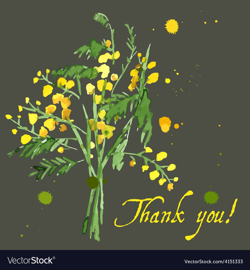 Hand-drawn mimosa painted in watercolor vector | Price: 1 Credit (USD $1)