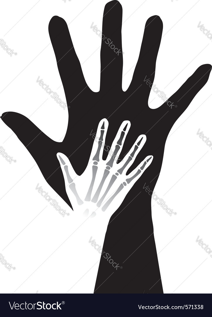 Anatomy hands vector | Price: 1 Credit (USD $1)