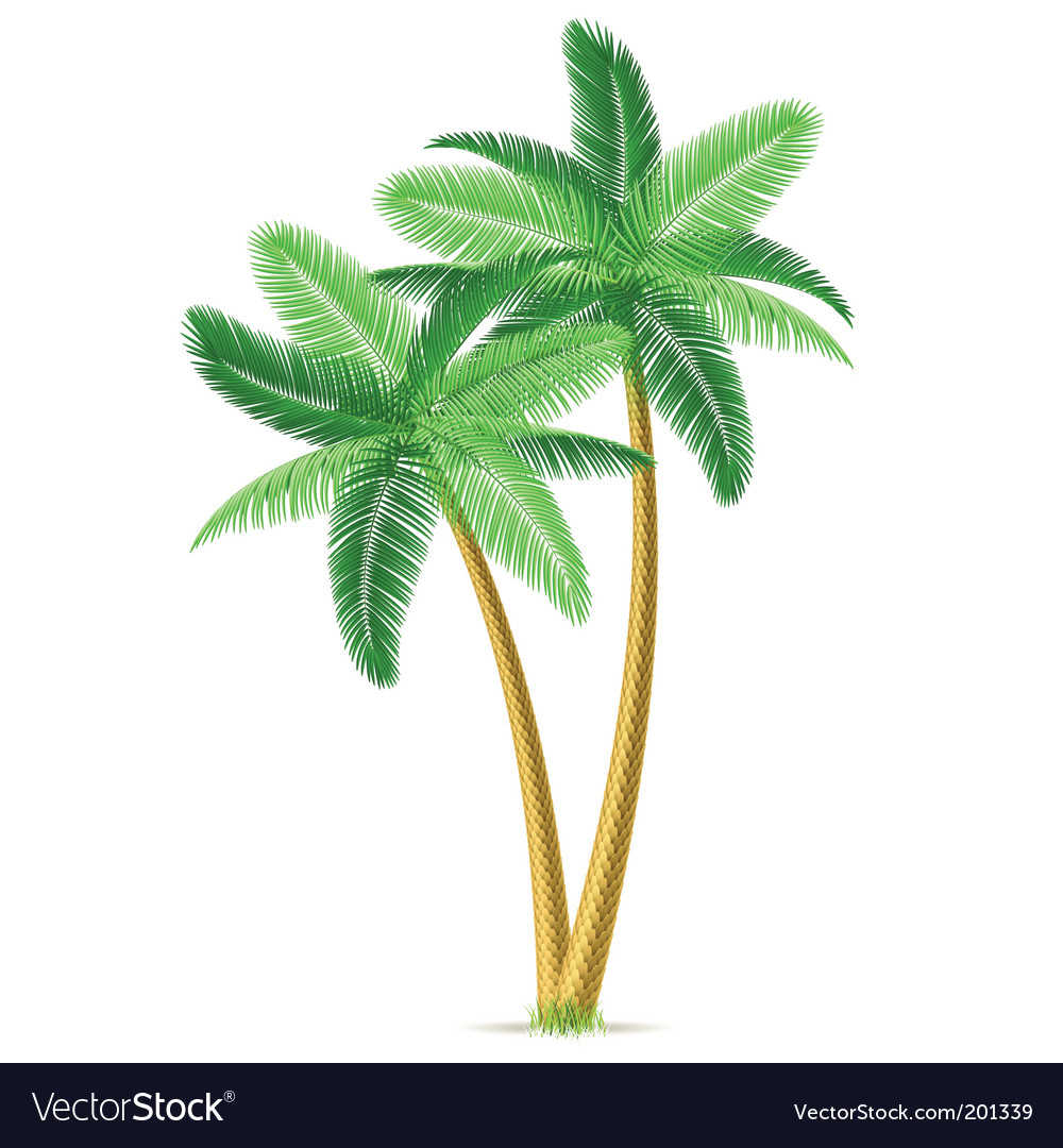 Tropical palm trees vector | Price: 1 Credit (USD $1)