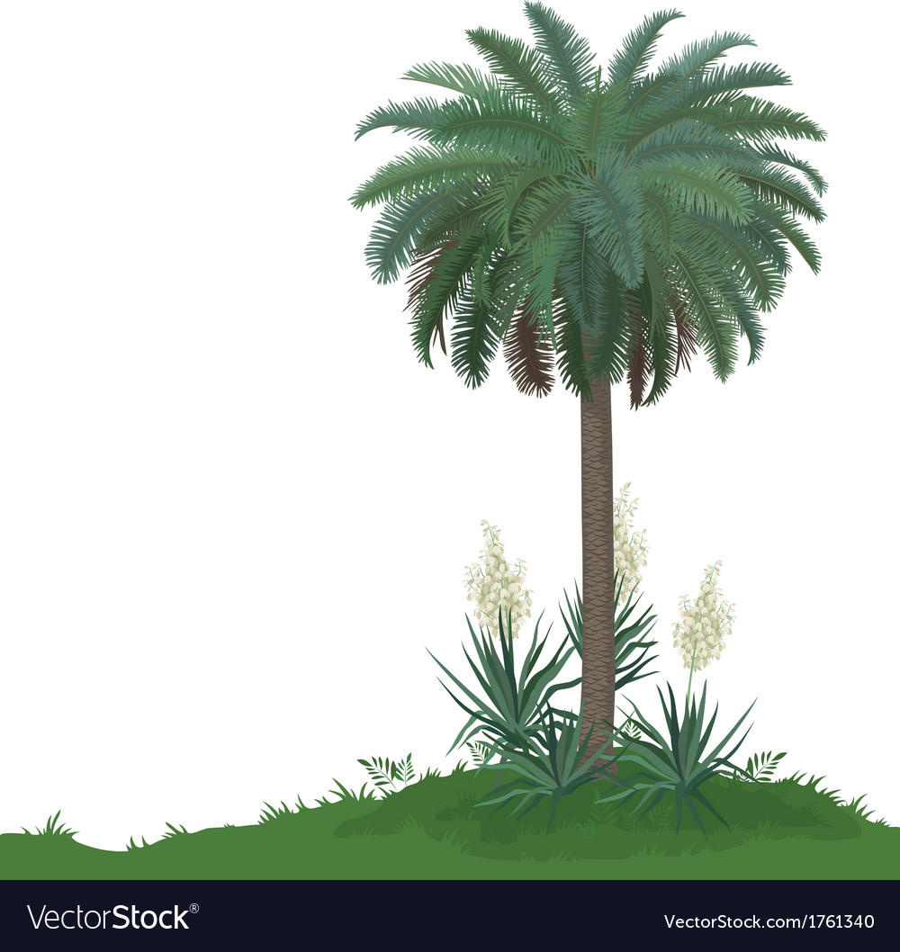 Palm tree and plants yucca vector | Price: 1 Credit (USD $1)