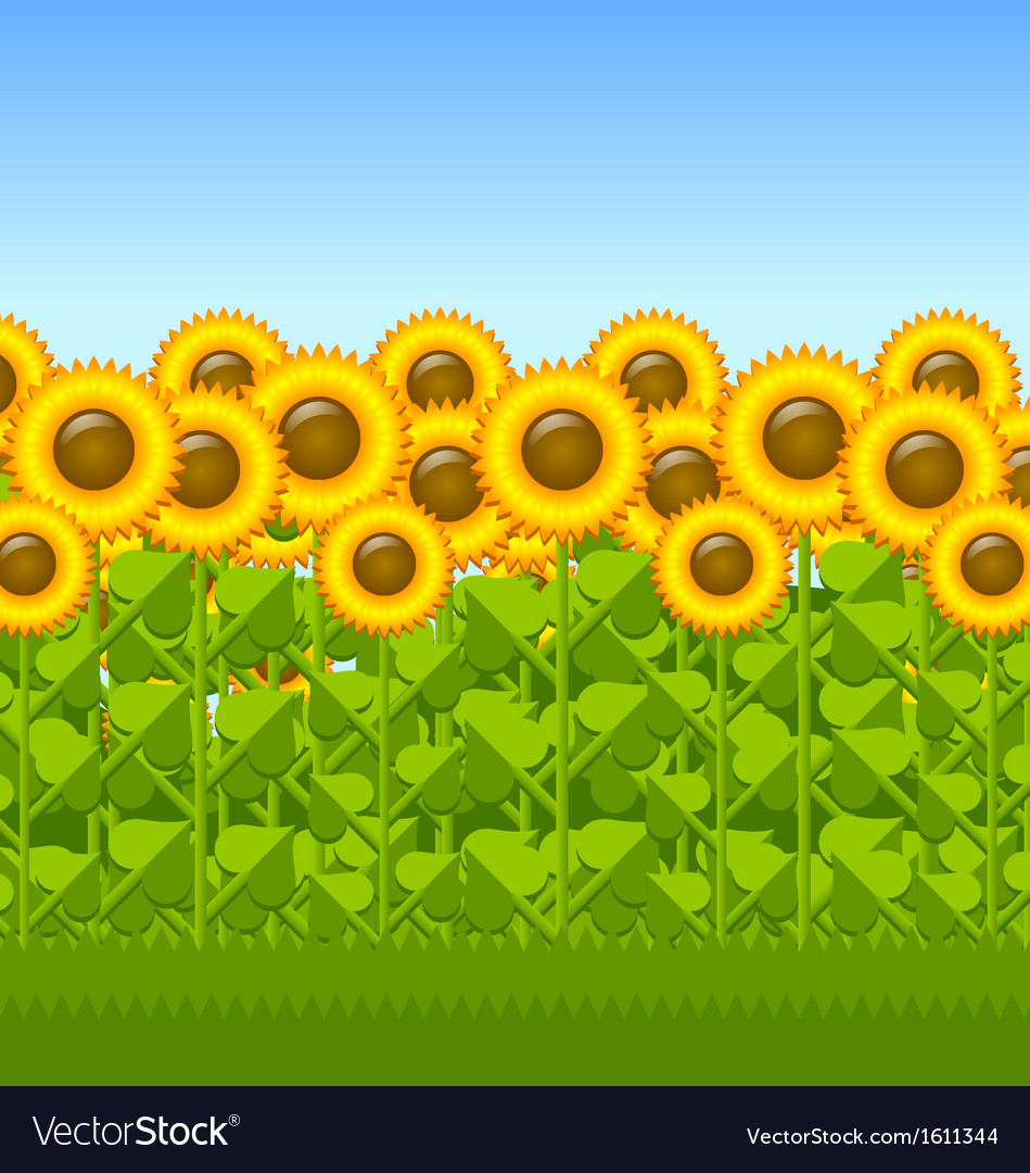 Sunflower field vector | Price: 1 Credit (USD $1)