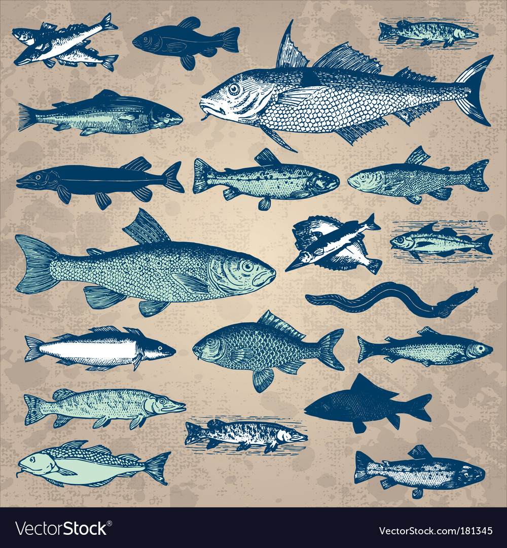 Vintage fish set vector | Price: 1 Credit (USD $1)