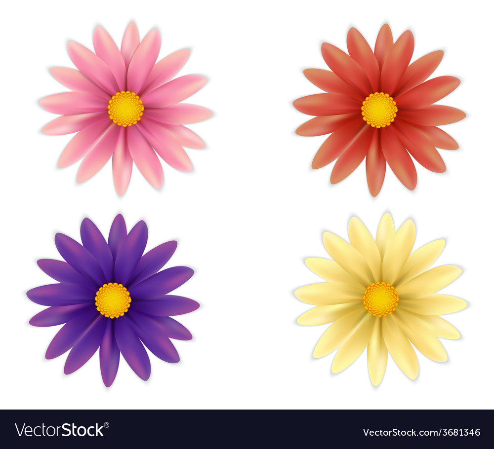 Set of beautiful colorful flowers vector | Price: 1 Credit (USD $1)
