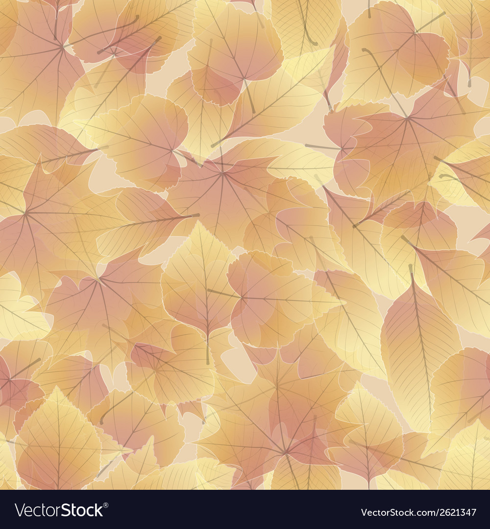 Colorful autumn leaves plus eps10 vector | Price: 1 Credit (USD $1)
