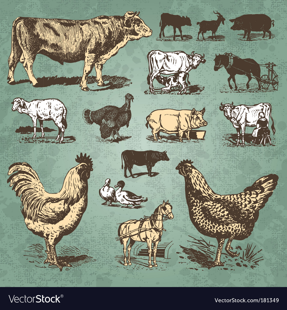 Farm animals vintage set vector | Price: 1 Credit (USD $1)
