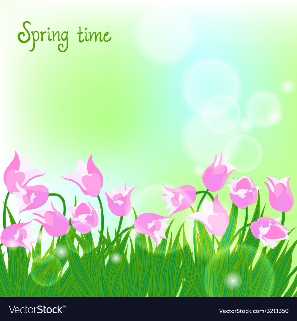 Spring card background with pink tulips vector | Price: 1 Credit (USD $1)