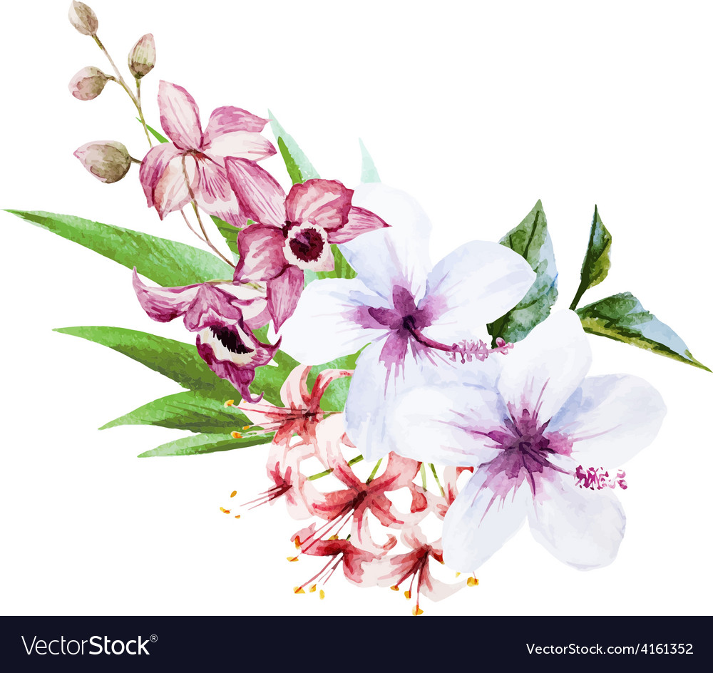 Nice orchids vector | Price: 1 Credit (USD $1)