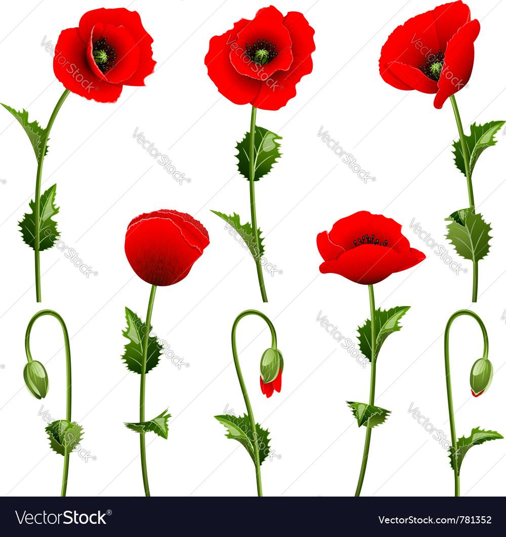 Poppies vector | Price: 1 Credit (USD $1)