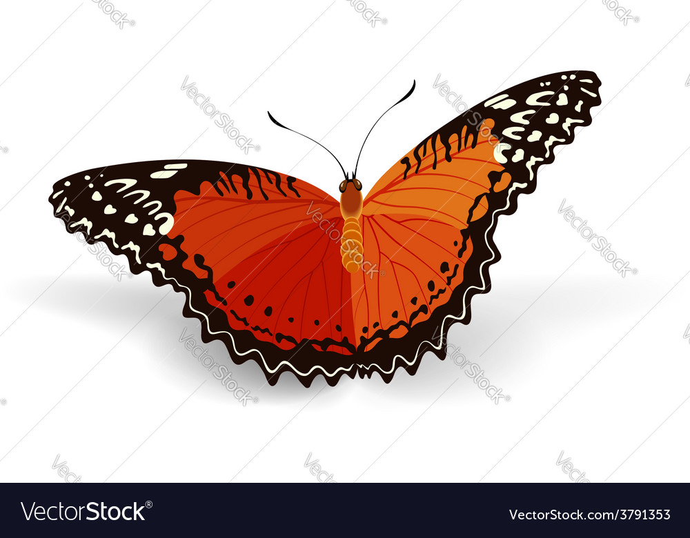 Bright butterfly vector | Price: 1 Credit (USD $1)