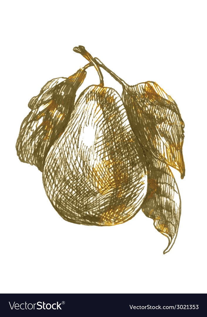 Nature pear vector   Price: 1 Credit (USD $1)