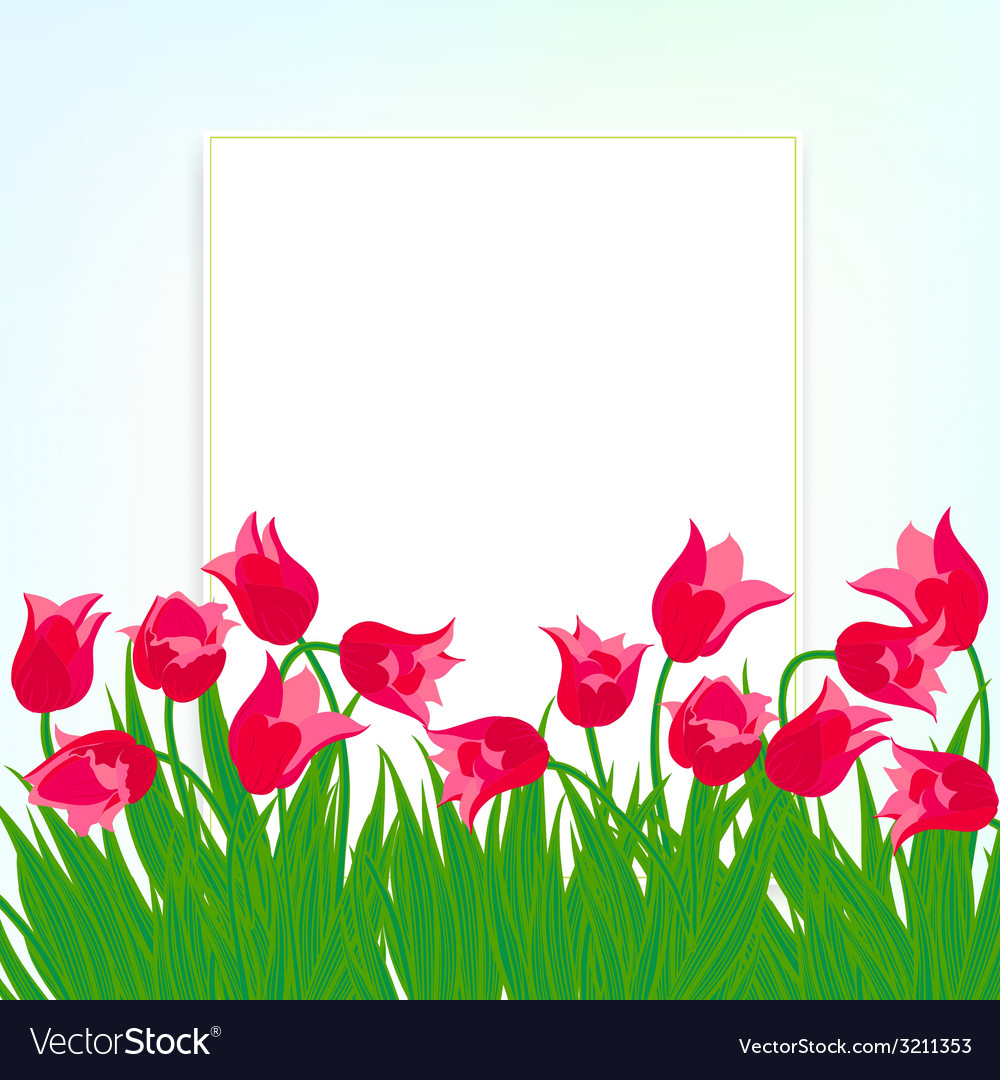 Spring card background with red tulips vector | Price: 1 Credit (USD $1)