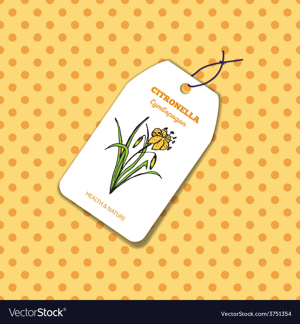 Health and nature collection citronella vector | Price: 1 Credit (USD $1)