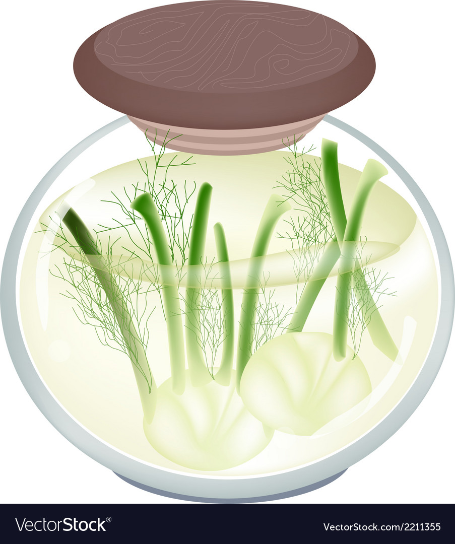 Jar of pickled fennels with malt vinegar vector | Price: 1 Credit (USD $1)
