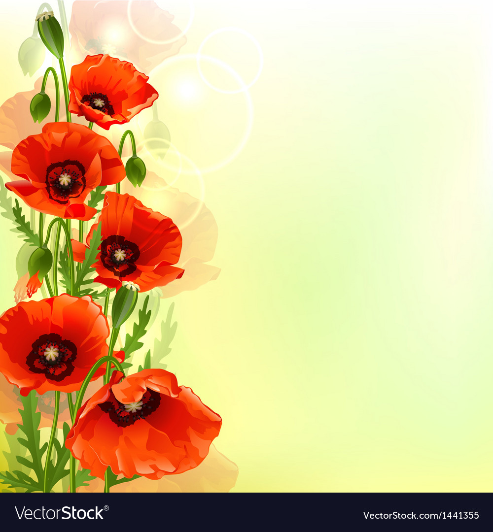 Poppy background vector | Price: 1 Credit (USD $1)