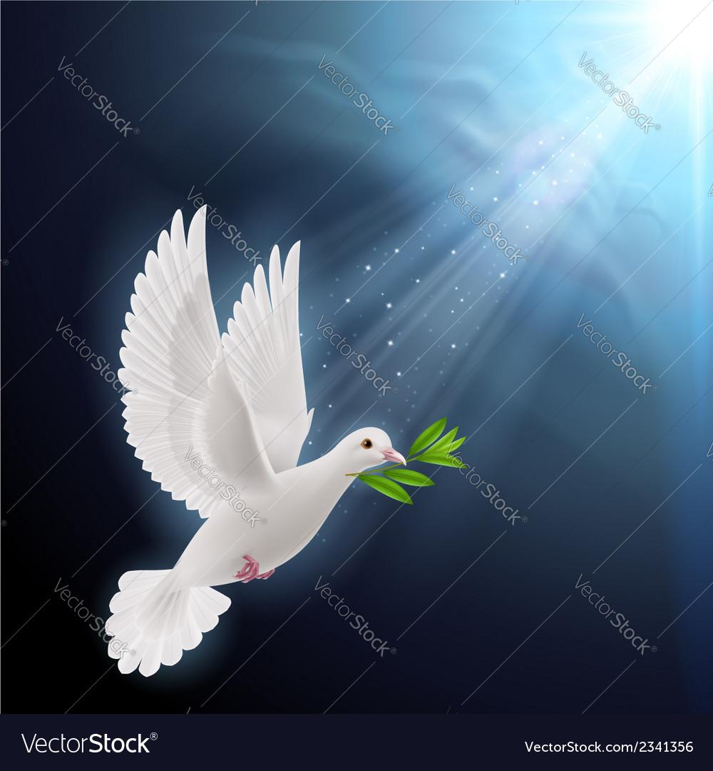 Fly dove in sunlight vector   Price: 1 Credit (USD $1)