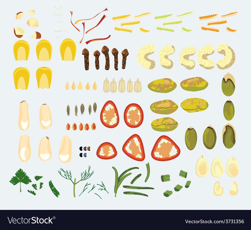 Set of 23 spices and nuts vector | Price: 1 Credit (USD $1)