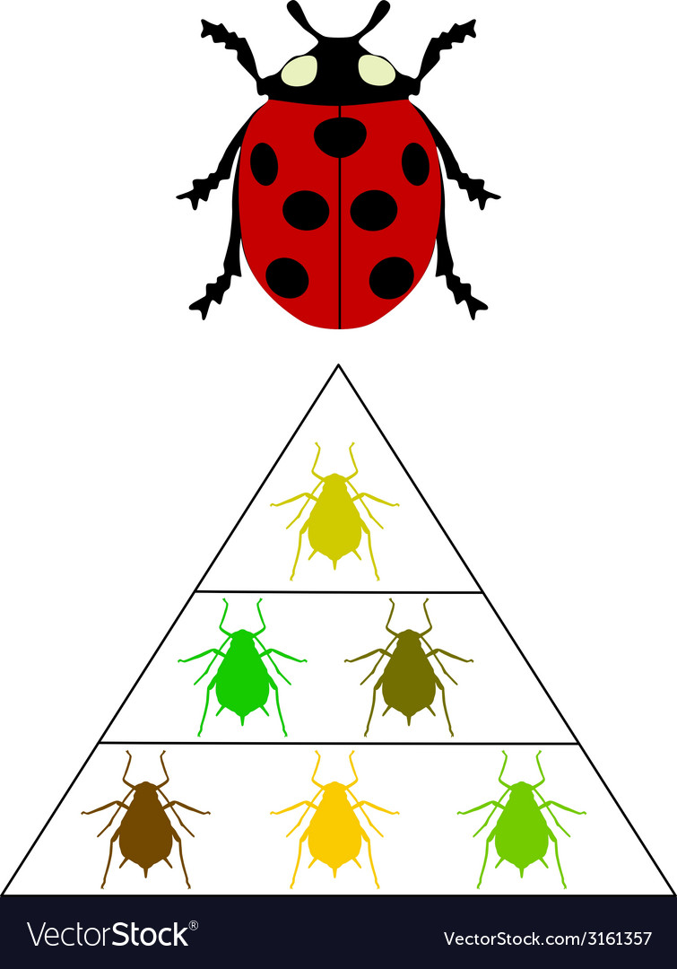 Ladybird diet pyramid vector | Price: 1 Credit (USD $1)