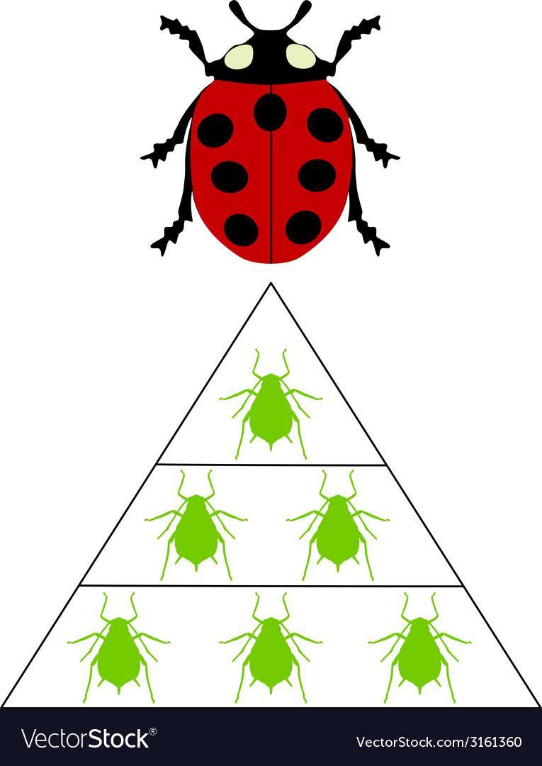 Ladybird diet pyramid vector | Price: 1 Credit (USD $1)