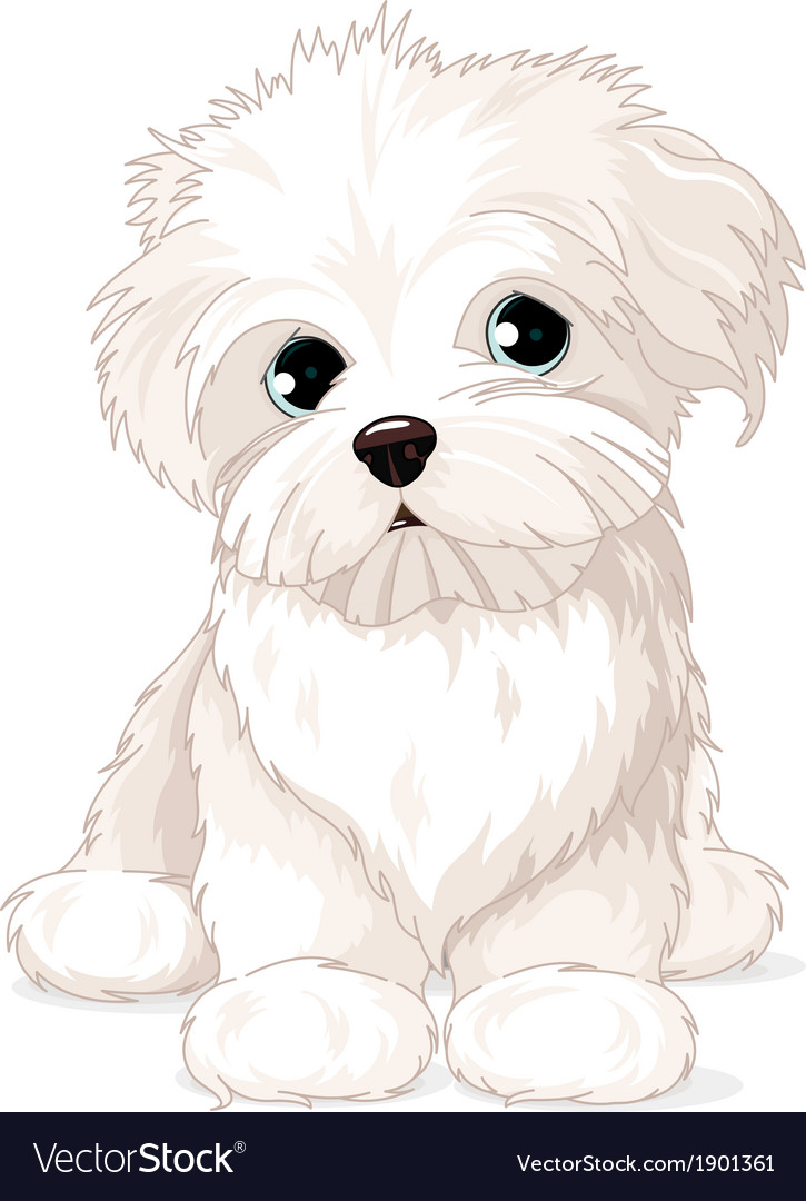 Maltese puppy dog vector | Price: 3 Credit (USD $3)