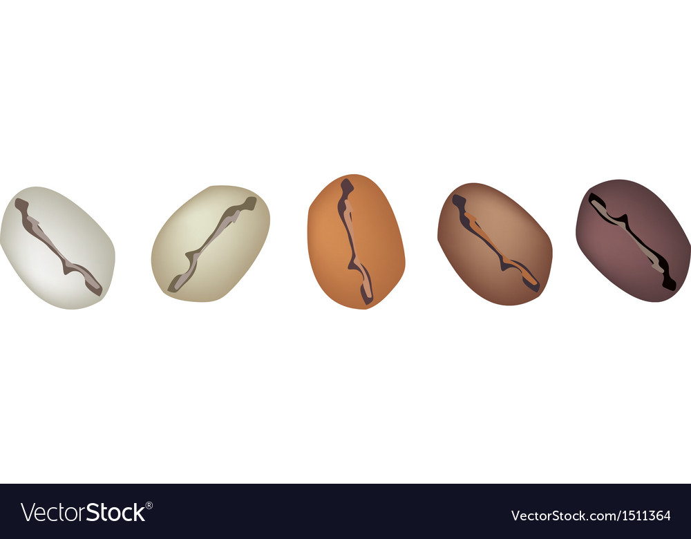 Different coffee beans row vector | Price: 1 Credit (USD $1)