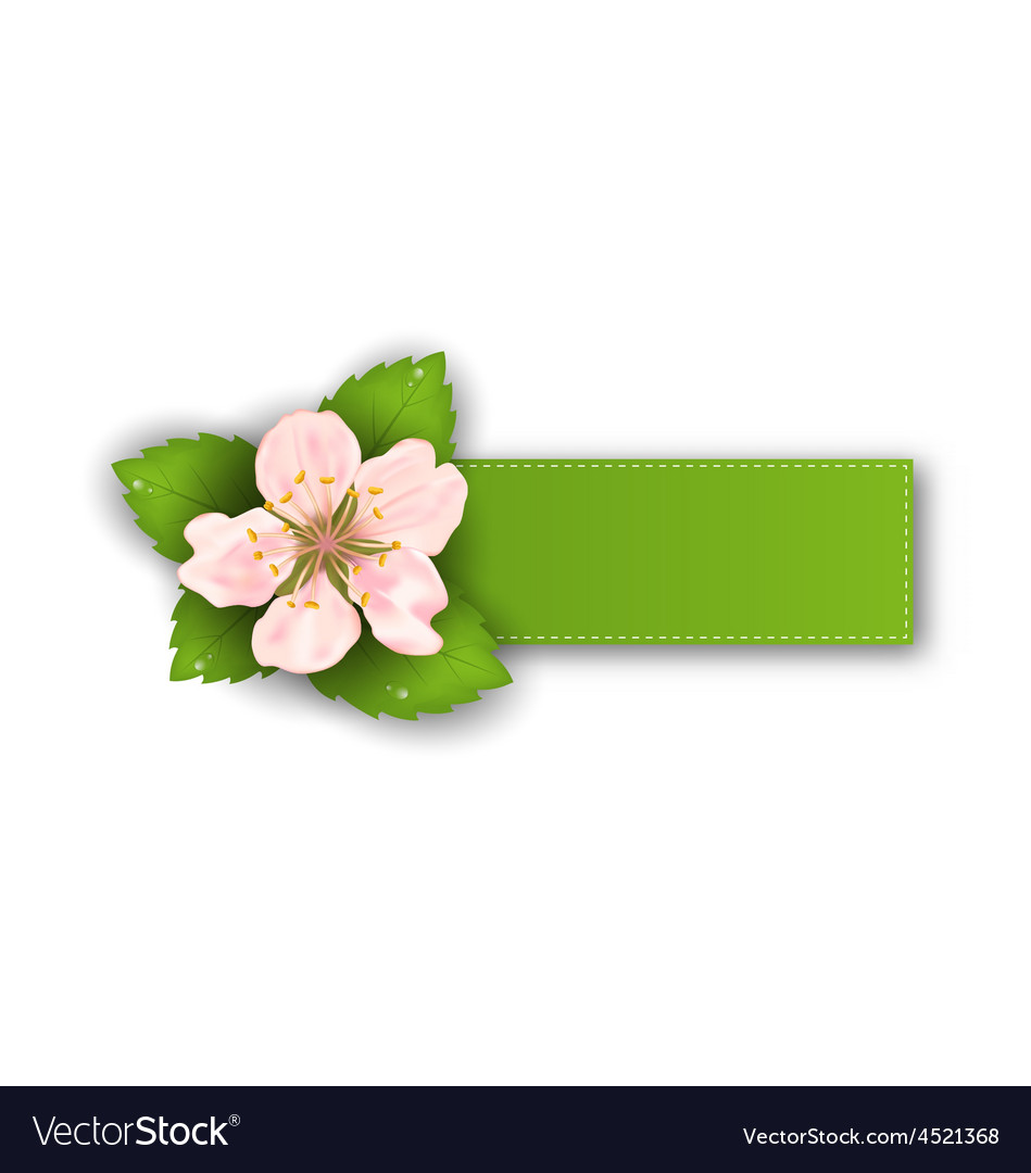 Special offer sticker with flower isolated on vector | Price: 1 Credit (USD $1)