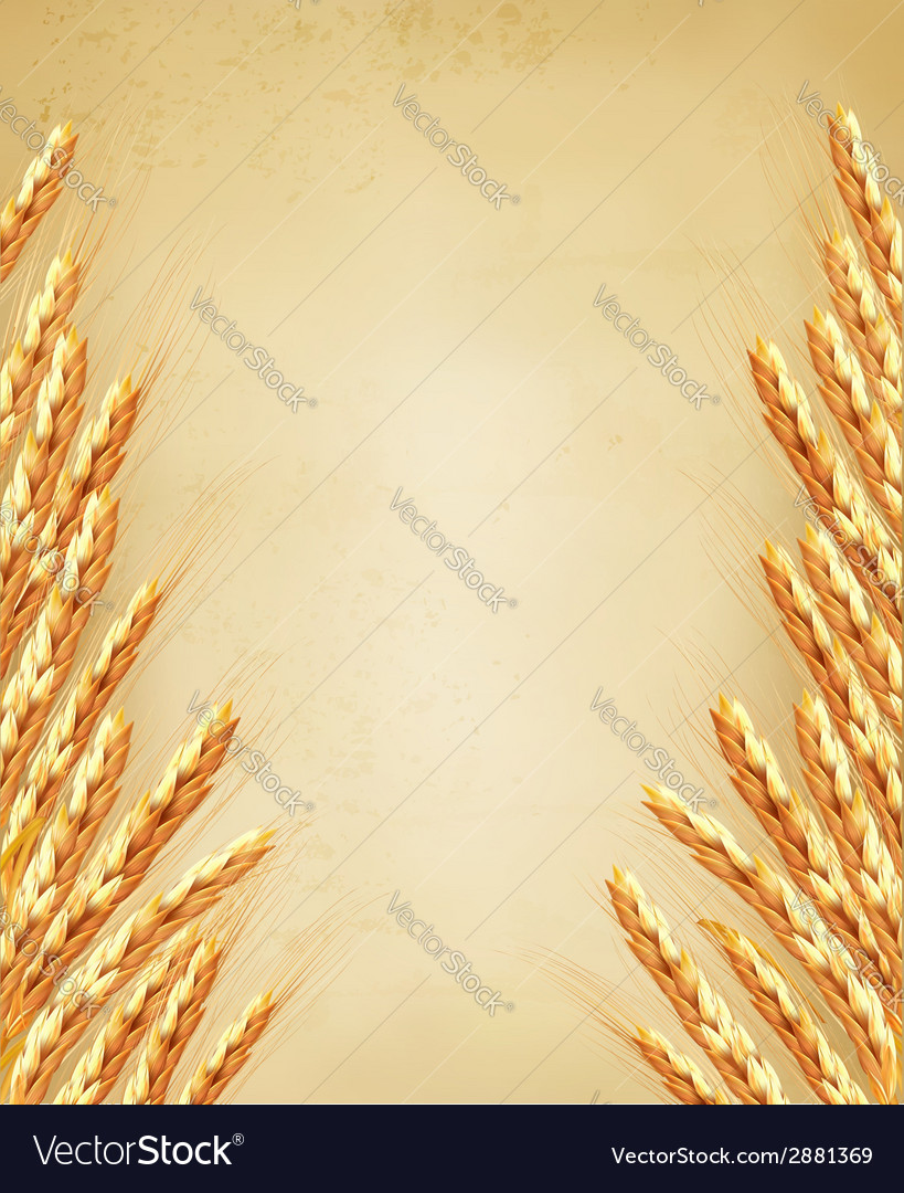 Ears of wheat on old paoer vector | Price: 1 Credit (USD $1)