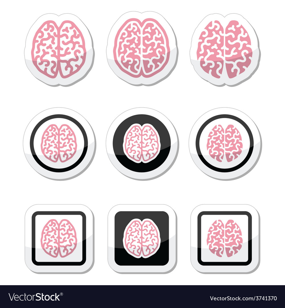 Human brain icons set - intelligence creativity c vector | Price: 1 Credit (USD $1)