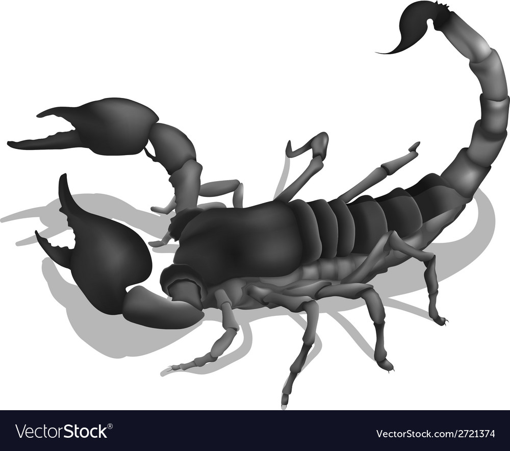 A deadly scorpion vector | Price: 1 Credit (USD $1)