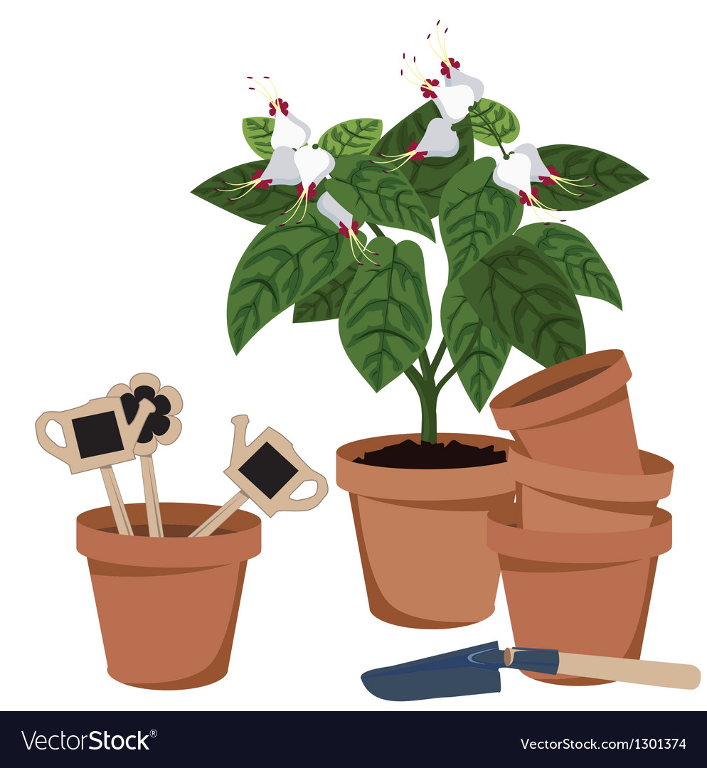 Room flower and flower pots vector   Price: 1 Credit (USD $1)