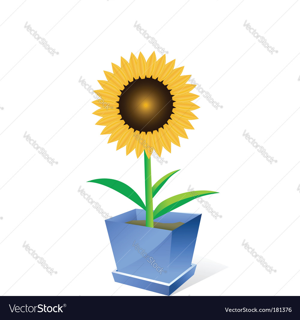 Sunflower spot concept vector | Price: 1 Credit (USD $1)
