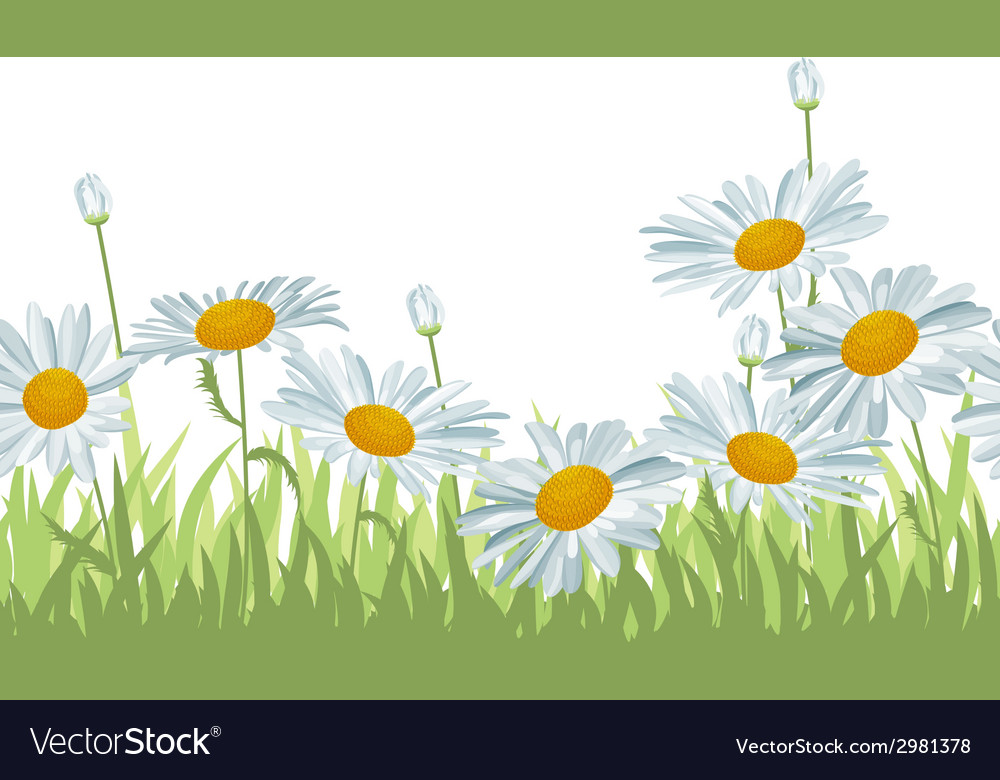 Seamless background with white daisies vector | Price: 1 Credit (USD $1)