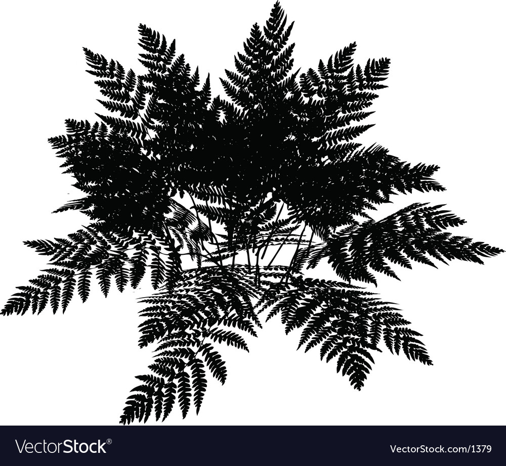 Fern graphic vector | Price: 1 Credit (USD $1)