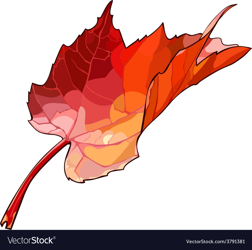 Autumn maple leaf vector | Price: 1 Credit (USD $1)