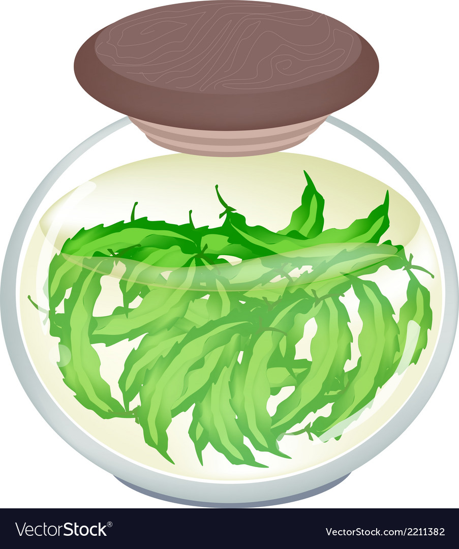 A jar of pickled green winged beans vector | Price: 1 Credit (USD $1)