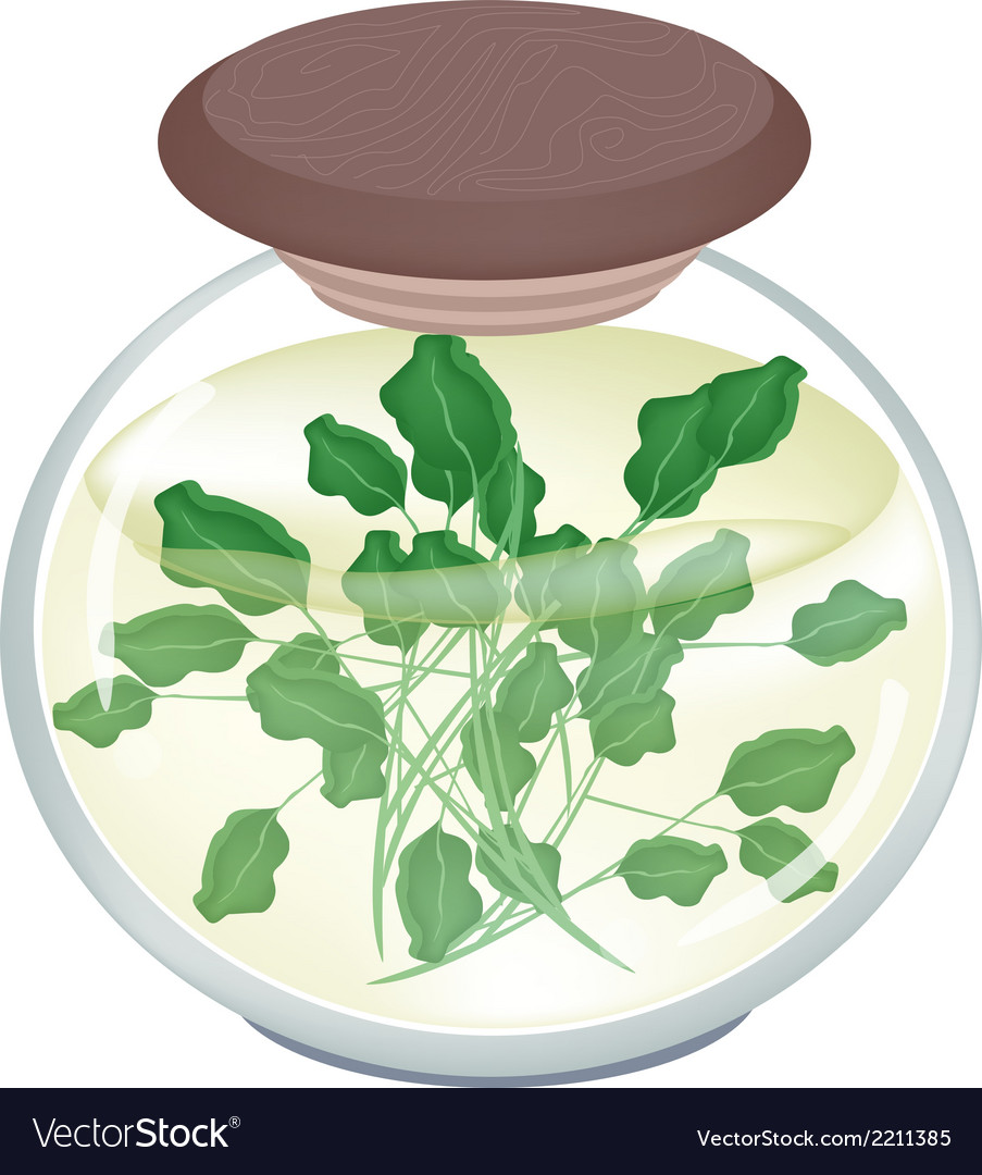 A jar of delicious pickled green watercress vector | Price: 1 Credit (USD $1)