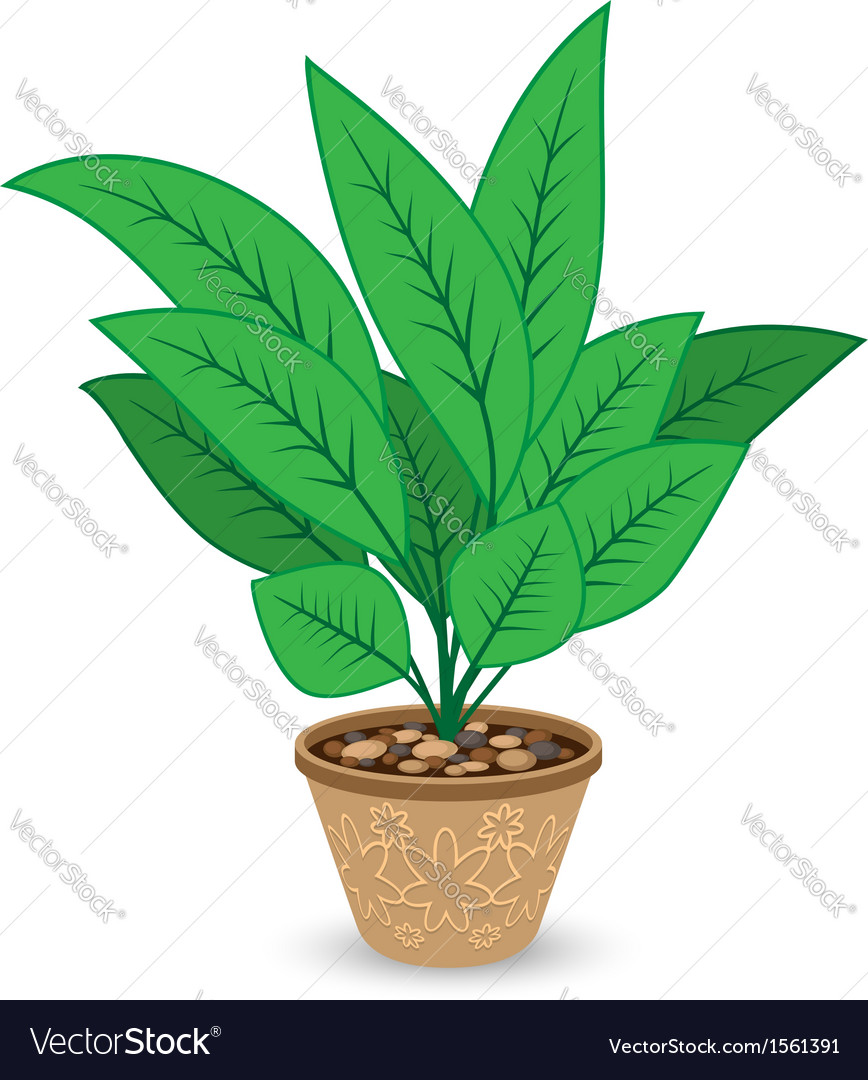 Plant in flowerpot isolated on white background vector | Price: 1 Credit (USD $1)