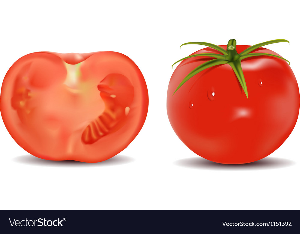 Fresh tomato vector | Price: 1 Credit (USD $1)