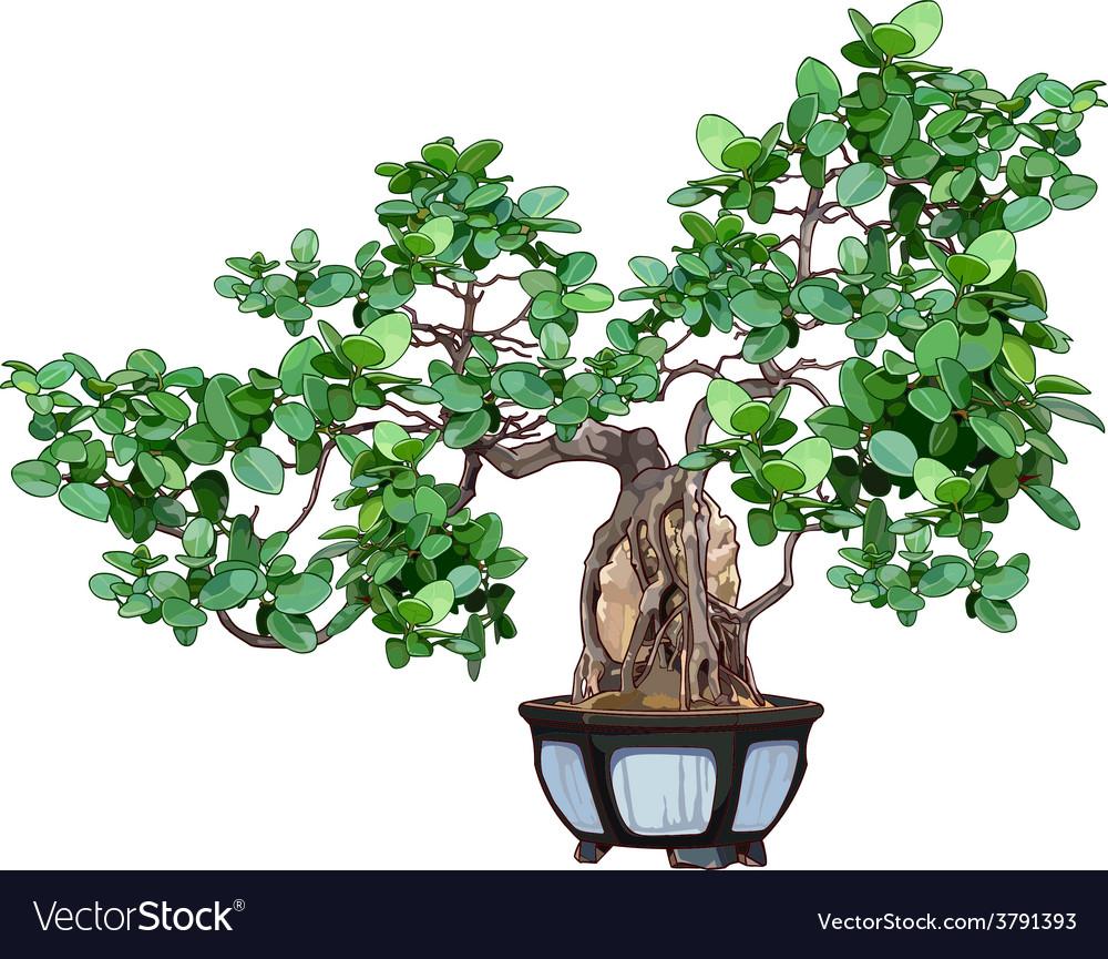 Bonsai tree in a pot vector | Price: 1 Credit (USD $1)